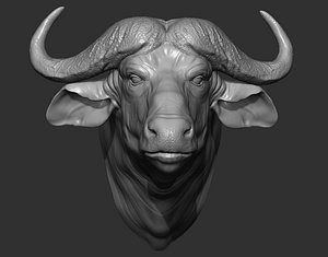3D Buffalo  head