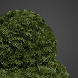 3D model chamaecyparis bushes