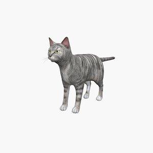 Amer Shorthair Cat 3D