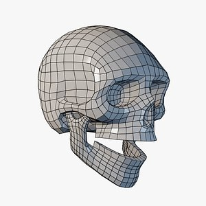 3D Lowpoly Human Skull