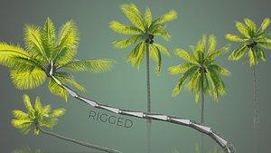 PalmTrees 3D model