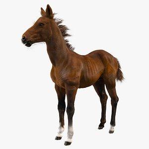horse foal model