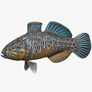 fish animal 3D model