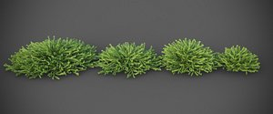 XfrogPlants Greasewood - Adenostoma Fasciculatum 3D