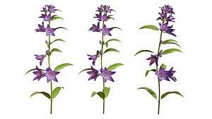 3D Campanula Perennial bell flower