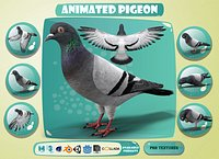 Realistic Animated Rock Pigeon Low-poly