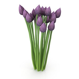 Chives buds 3D model