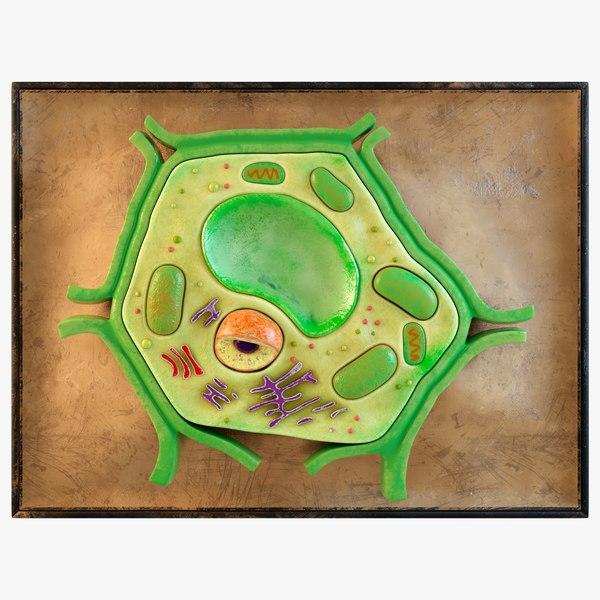 3D Plant Cell Model - TurboSquid 1739907