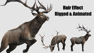 3D animated stag deer elaphurus model