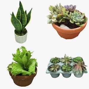 Plant Collection 01 3D model