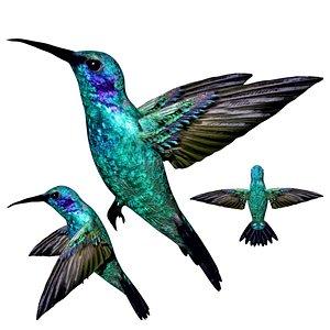 3D Rigged Humming bird model