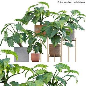 Philodendron undulatum 3D model