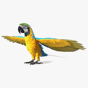 3D Blue and Yellow Macaw Parrot Rigged