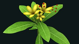 3D model Malpighiaceae flower and ladybug
