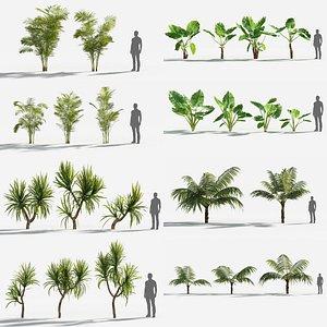 Plants Pack 6: Rainforest: GrowFX 3D model