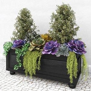 brassica oleracea ornamental 3D model