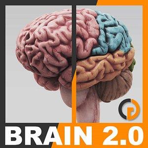 3ds max human brain - internal anatomy