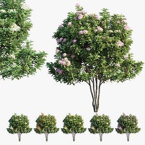 3D plant set 21 model