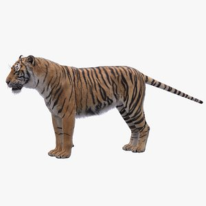 realistic tiger fur 3D model