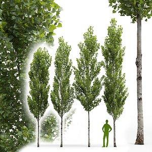 3D Poplar Populus nigra V6