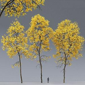 3D tree ash ash-tree model