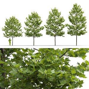 3D Plane-tree Platanus Acerifolia V4