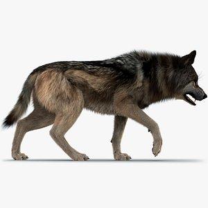 3D Wolf FUR model