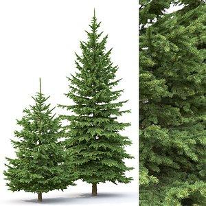 trees spruce pungens model