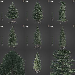 2021 PBR Colorado Spruce Collection - Picea Pungens 3D