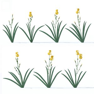 iris yellow 3D model