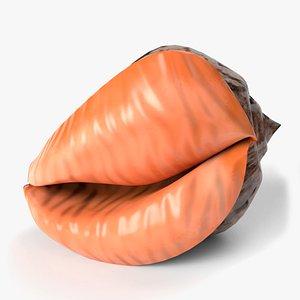 3D seashell shell sea