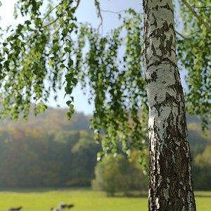 Natural Birch 1 -13 meters 3D