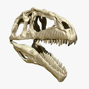 3D giganotosaurus skull set skeletons