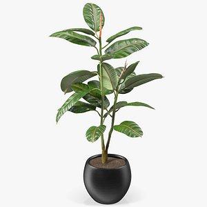 3D rubber tree plant pot