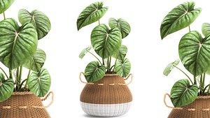 plants white baskets 3D model