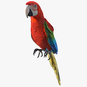 Red and Green Macaw Parrot Sitting Pose 3D model