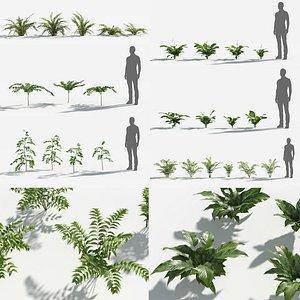 Plants Pack 8: Rainforest: GrowFX 3D
