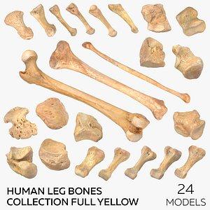 Human Leg Bones Collection Full Yellow -  24 models 3D model