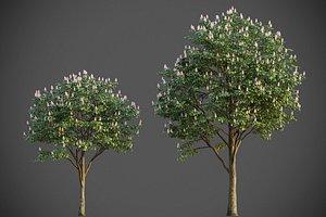 3D XfrogPlants Horse Chestnut - Aesculus Hippocastanum model