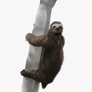 sloth rigging animation three-toed 3D model