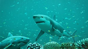 Diving with Sharks 3D model