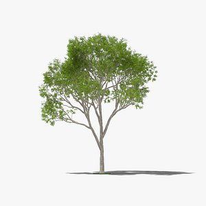 3D Eucalyptus Tree