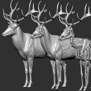 Red Deer Stag Elk VFX MUSCLE SIMULATION 3D