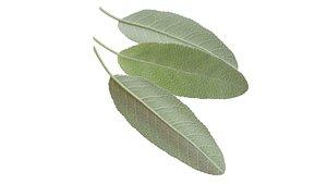 sage leaf 3D model
