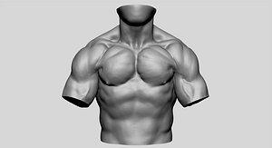 torso anatomy 3D model