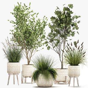 Ornamental plants in rattan baskets 1047 3D