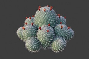 3D XfrogPlants Twin Spined Cactus - Mammillaria Geminispina