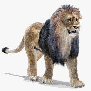 lion fur rigging animation 3d 3ds