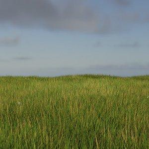 basic grass 3D model