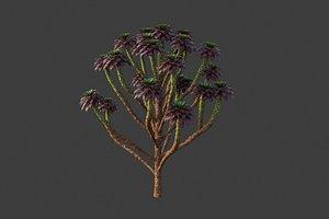 3D XfrogPlants Tree Houseleek - Aeonium Arboreum